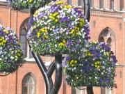 landskrona Basket Case