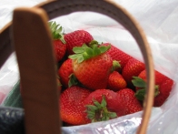 stawberries in my bag