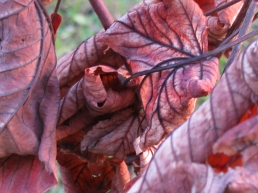 autumn leaves x1