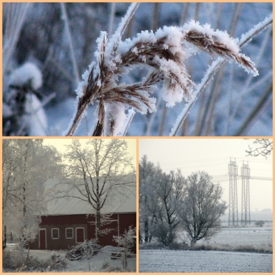 frosty morning 6
