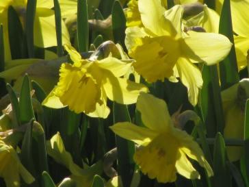 Lund - sun in a pot - April