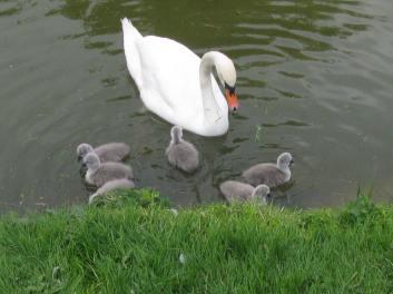 Landskrona - proud mum - May