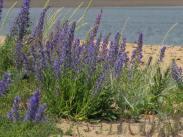 Simrishamn - pretty on the beach - June