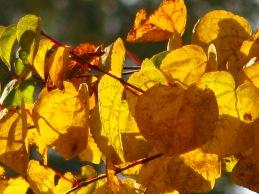 Simrishamn - autumn gold - October