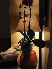 Landskrona - my bedroom, October