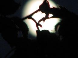Simrishamn - spooky moon - October