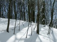 german winter
