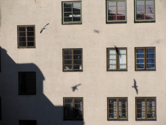 Simrishamn - flying shadows - February
