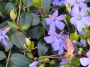 Simrishamn - blue spring - April