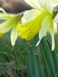 my spring favorite