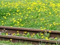 rails in springtime