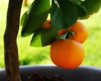 orange - free-download com