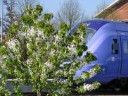 train & blossom