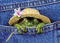 frog in the pocket - centralvacuum.typepad com