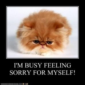 feeling sorry  - cheezburger com