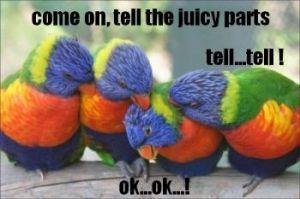 parrots - sparkpeople com