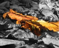 leaves featured
