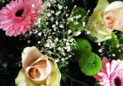 arranged beauties