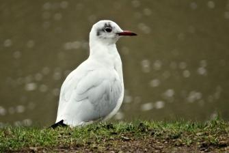 cute seagull