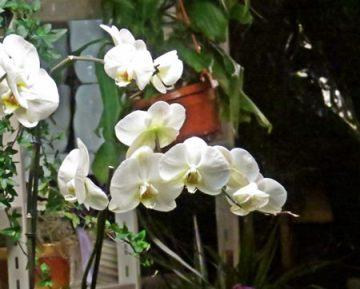 florist shop 3