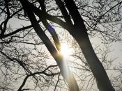 afternoon sun 1