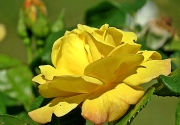 delightful yellow