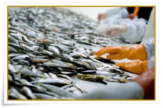 loejromsfiske - norrkustfiske se