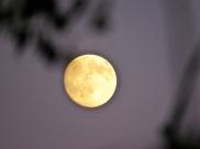 skanör moon