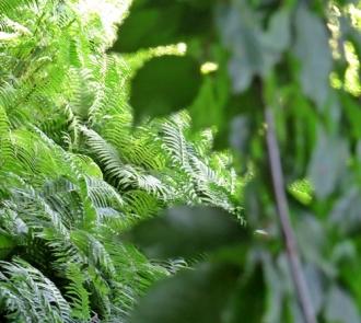 lush park greens