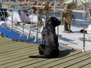 ship dog Nova