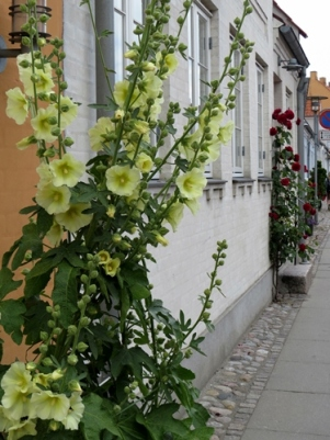 street houses and their flowers