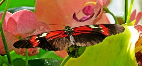 spread wings
