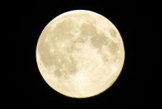 vienna moon