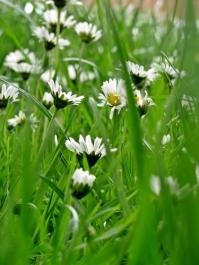 pretty-in-the-grass