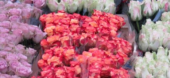 market beauties