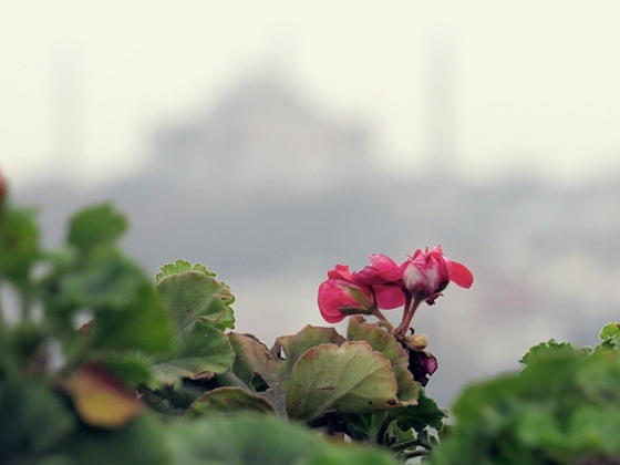 flower with a view