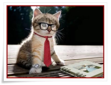 cat - ewallpaperhub com