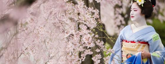 cherry blossom - japanphotoguide com