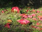 fallen beauties