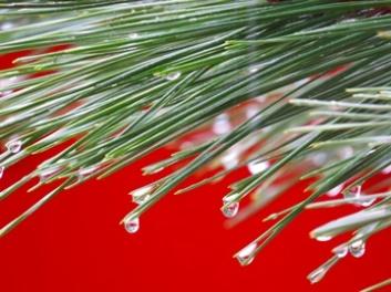 japanese raindrops