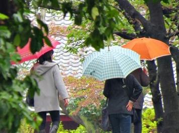 ladies with umbrellas - featured