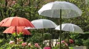 more umbrellas