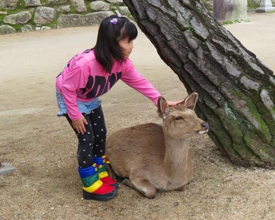 tourist friendly deer