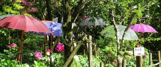 umbrellas 1