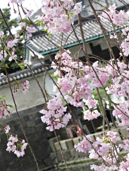 palace blossoms