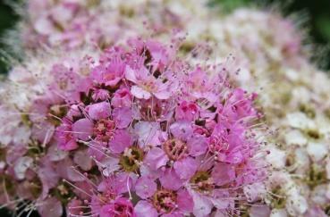 pink richness