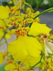 wild orchide