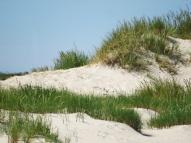 Grenen dunes