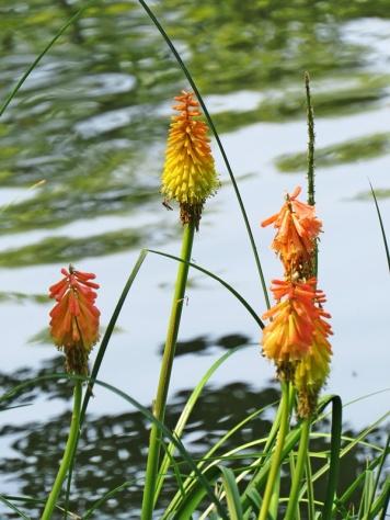 on the lake bank