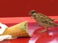 who does like ice cream